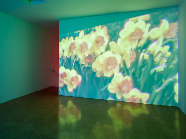 Diana Thater, Oo Fifi, Five Days in Claude Monet's Garden, Part II, 1992, 3 video projectors, 3 DVDs, 3 DVD players, sync box, Lee filters and existing architecture, AP 1/1