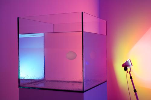 Ann Veronica Janssens, Aquarium, 2005, Glass, water, methanol, silicone oil, 15 x 15 x 15 in.