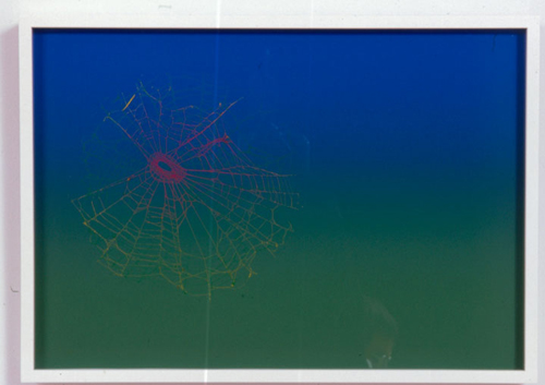 Pae White, Web Sampler #47, 2001, Spider web on Perfect Paper, 40 x 30 in.