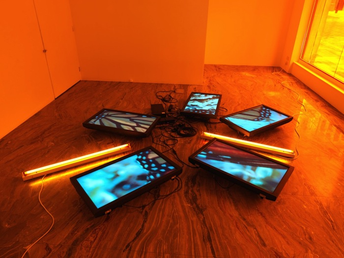 Diana Thater, Untitled (Butterfly Videowall #2), 2008 (detail), Five flat screen LCD monitors, Blu-ray player, Blu-ray disc, distribution amplifier, two fluorescent light fixtures, and Lee filters, Dimensions variable