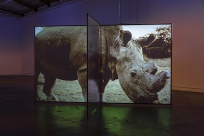 "Diana Thater, ""As Radical As Reality"" (2017), installation for two video projectors, two media players, and Altuglas Visio screens, 72 x 128 x 128 in."