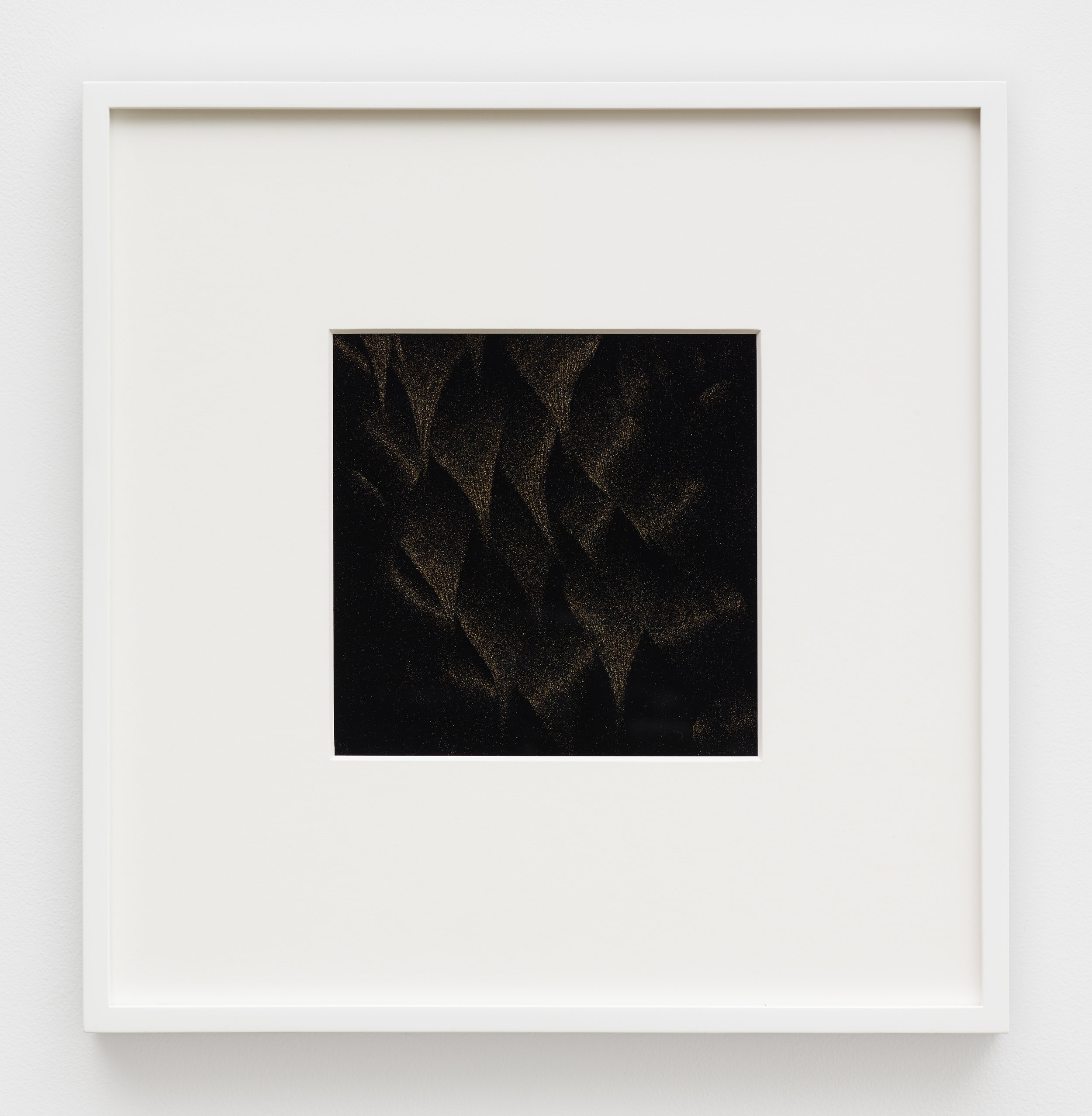 Kerry Tribe, Parnassius mnemosyne, 2018, Pigment print.