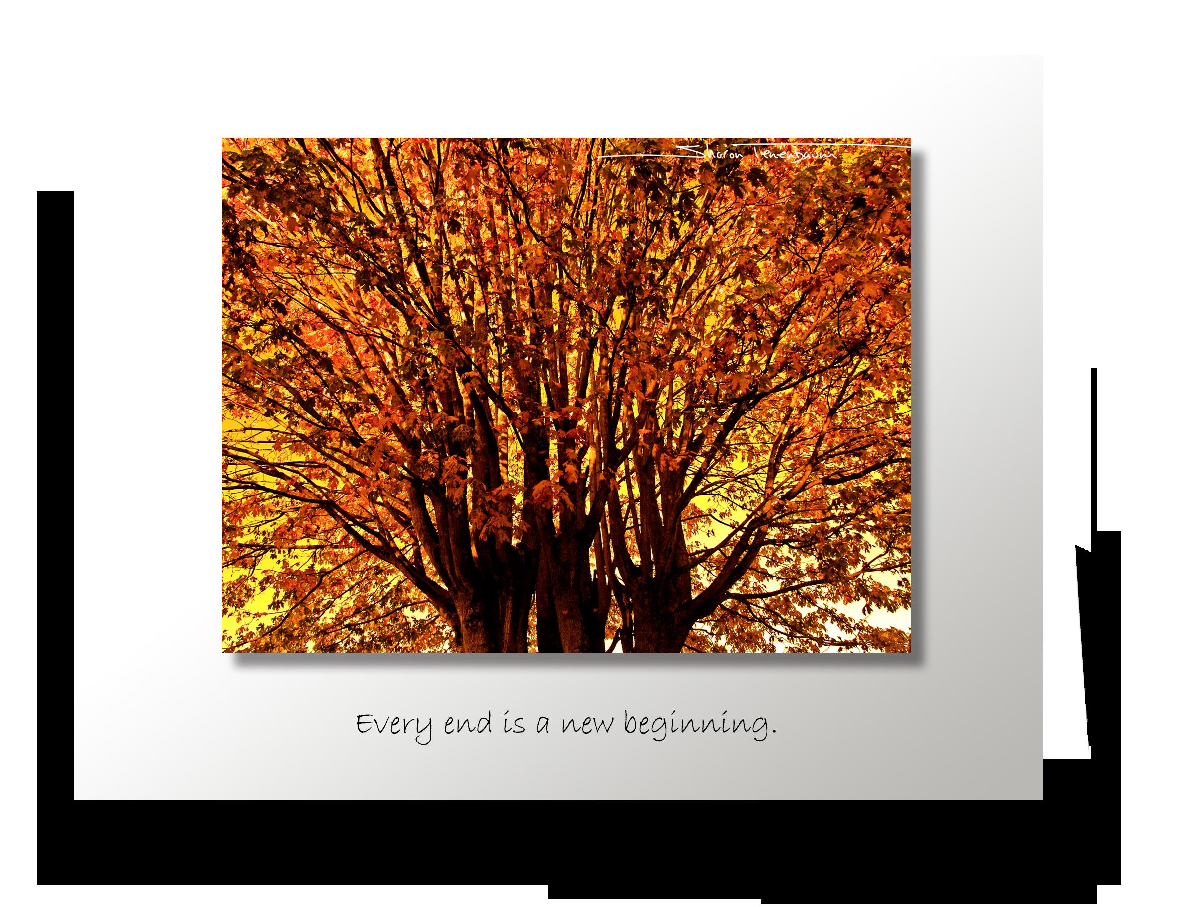 CL021 Autumn Tree