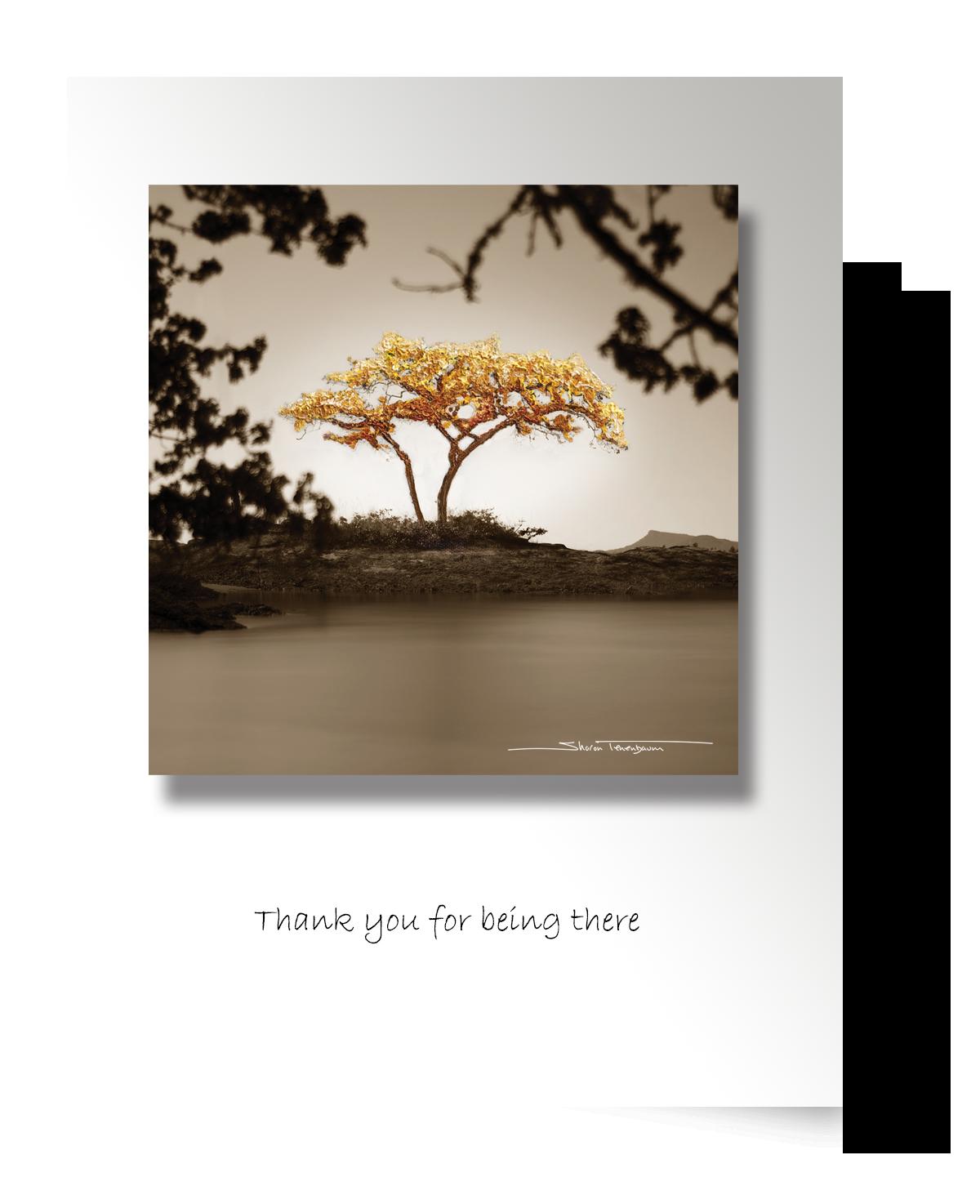CP063 Galiano Tree