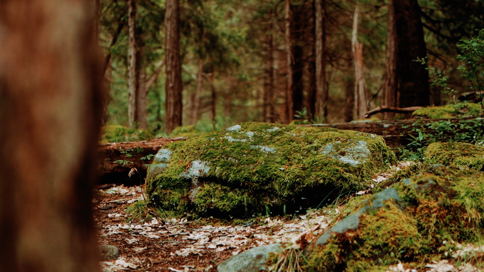 Yosemite 3.jpg