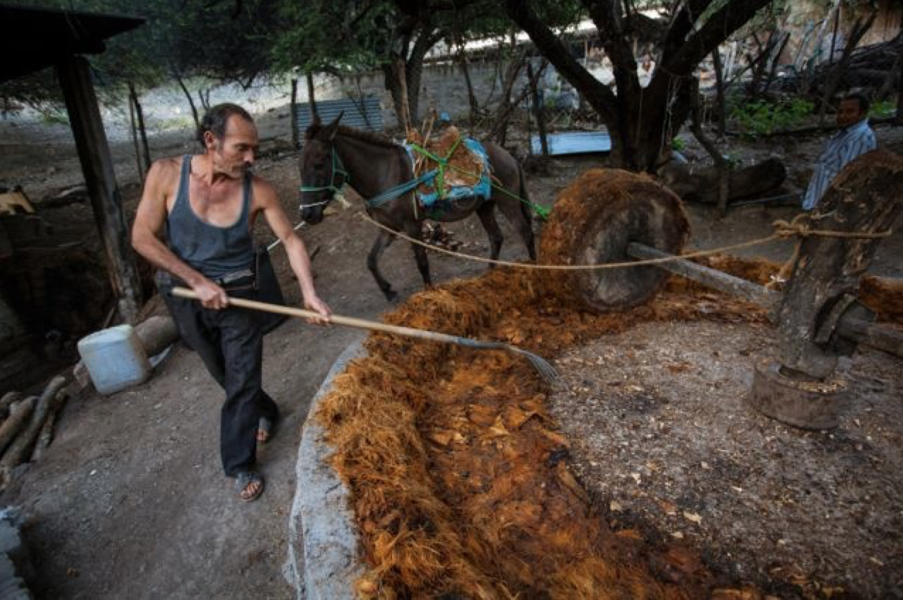 A picture from the mezcal production of  Mezcal Vago, as described by K&L Wine Merchants blog.