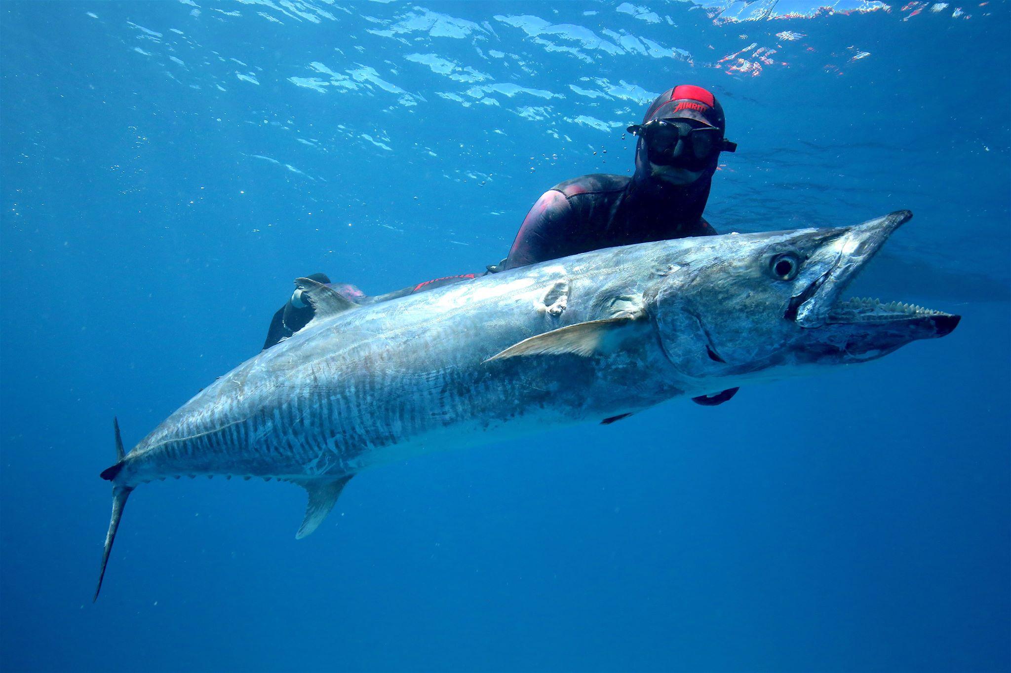 A 30kg Spanish Mackerel landed using the new Envy Reel.