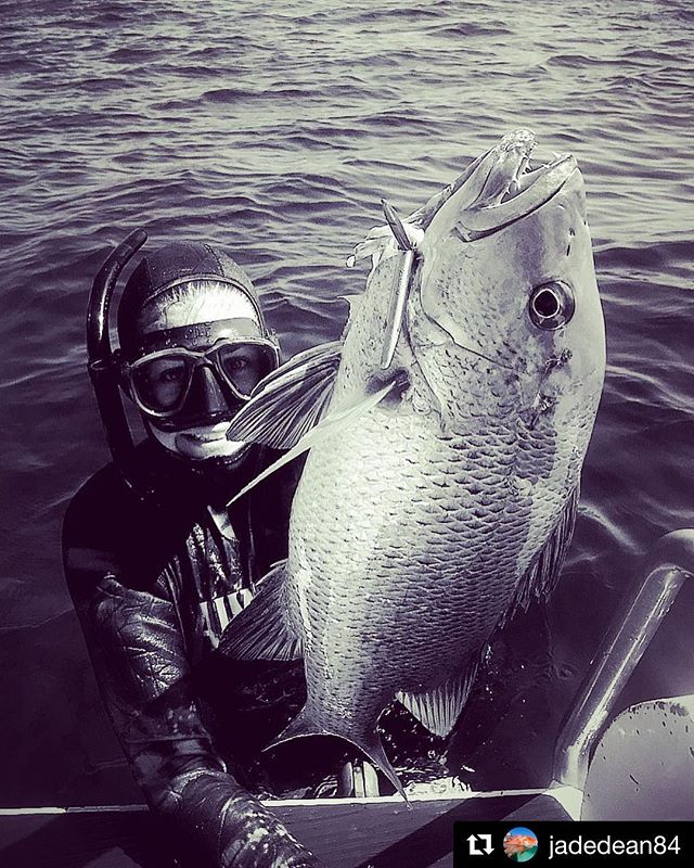 #Repost @jadedean84  Reef Jacks are always good fun!  #spearfishing #mangrovejack #girlswhospearfish #downunder #ntlife #northernterritory #topend #eastarnhemland #spearo #speara #happy #livethelifeyoulove #aimrite @spearfishing_reviews @spearchannel @spearfishing_international @spearfish.and.freedive.world @