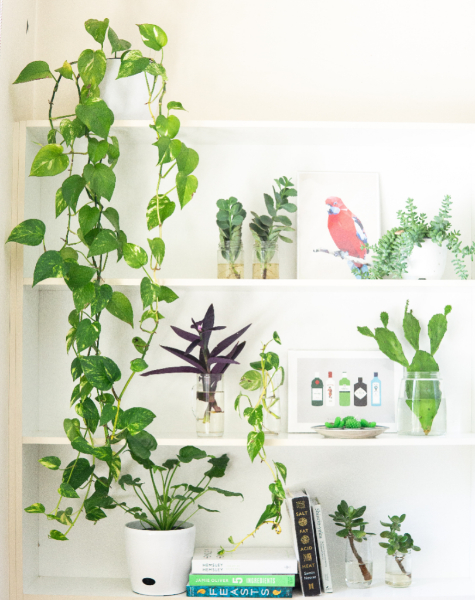 BIZ-LOCATION-how-to-style-bookcase-tabletop-plants-greenery-framed-art.jpg