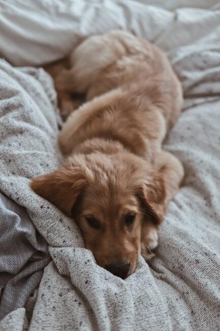 BIZ-LOCATION-home-decor-fall-winter-season-bedding-puppy.jpg