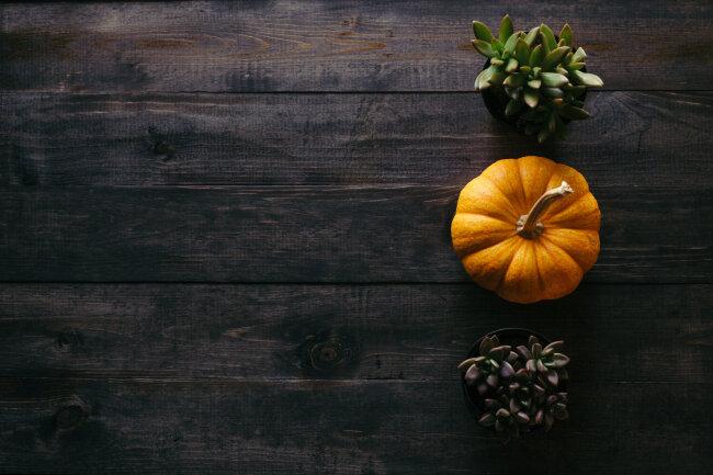 BIZ-LOCATION-fall-decor-pumpkin-wood-table-succulents.jpg