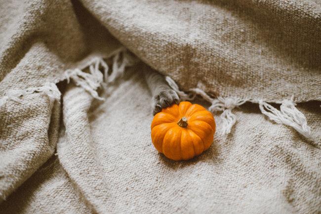 ochre-beige-pumpkin-blanket-cozy-fall-decor.jpg
