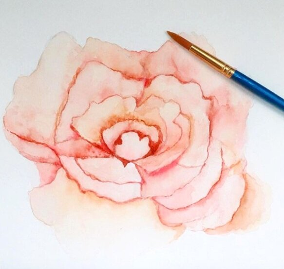 Pink rose measurement: A3 - £70  Watercolour printing using fine art paper (300gr   100% cotton)  All prints are signed by Sarah. Shipped unframed in a tube