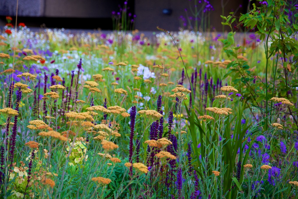 Dunnett planting at the Barbican in July - colourful and naturalistic