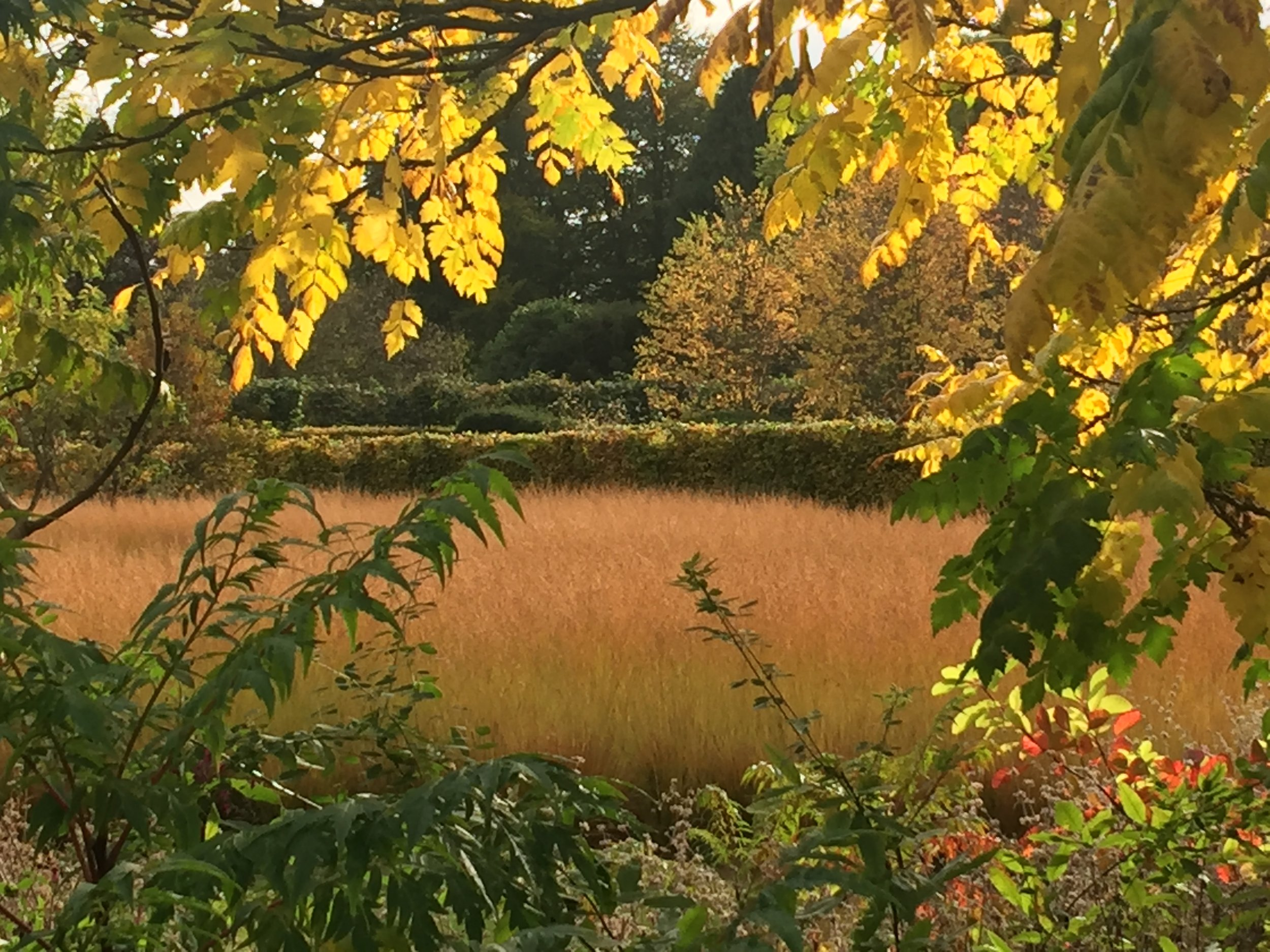 Oudolf planting at Scampston in October - dramatic and architectural