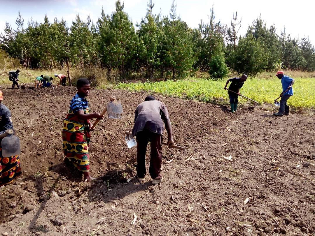 Viljelymenetelmäkoulutusta saaneita maanviljelijöitä pellolla Nyamanden kylässä Njomben maalaiskunnassa. Kuva: NADO