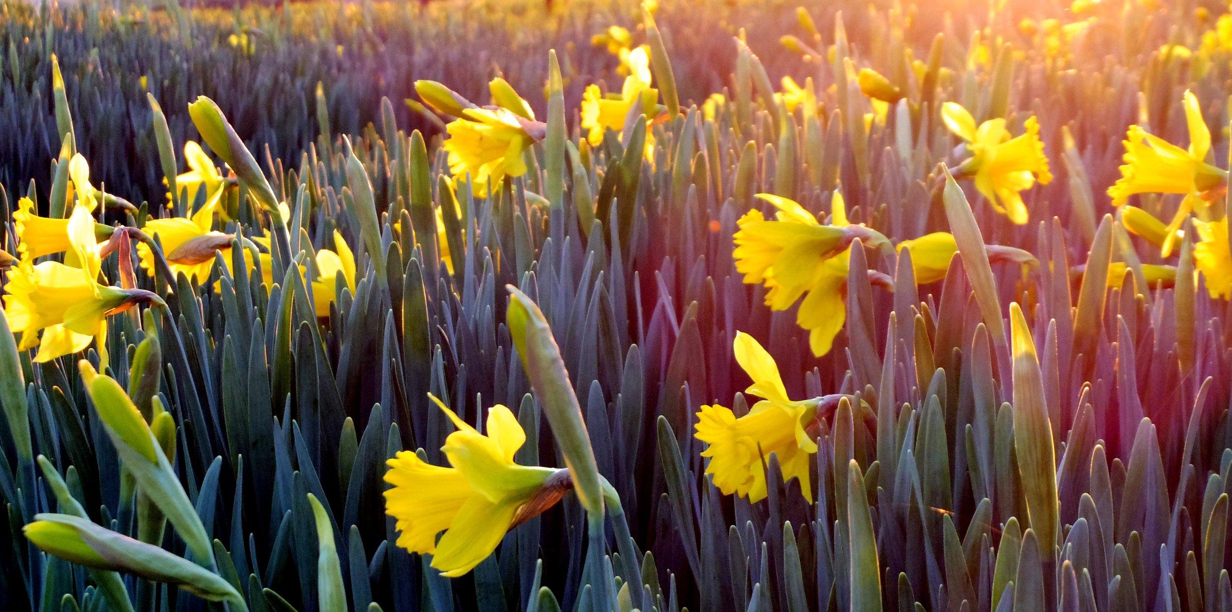 beautiful-bloom-blooming-911323.jpg
