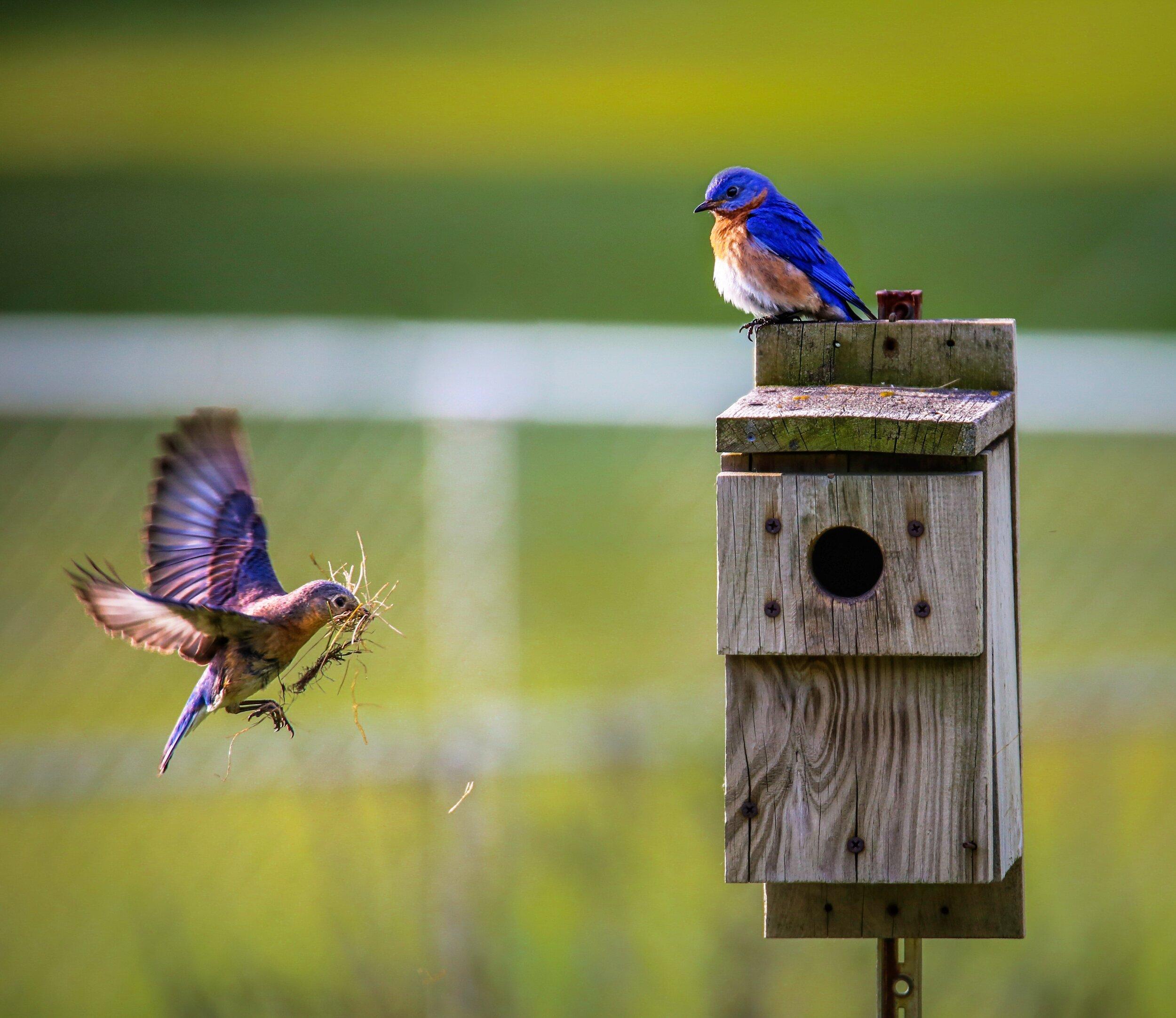 animals-birdhouse-blurred-background-1156507.jpg