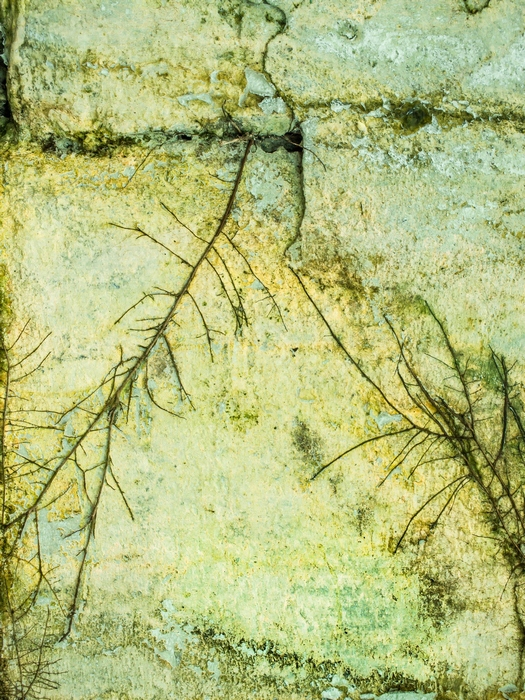 P8206428-H-26-7x5.jpg