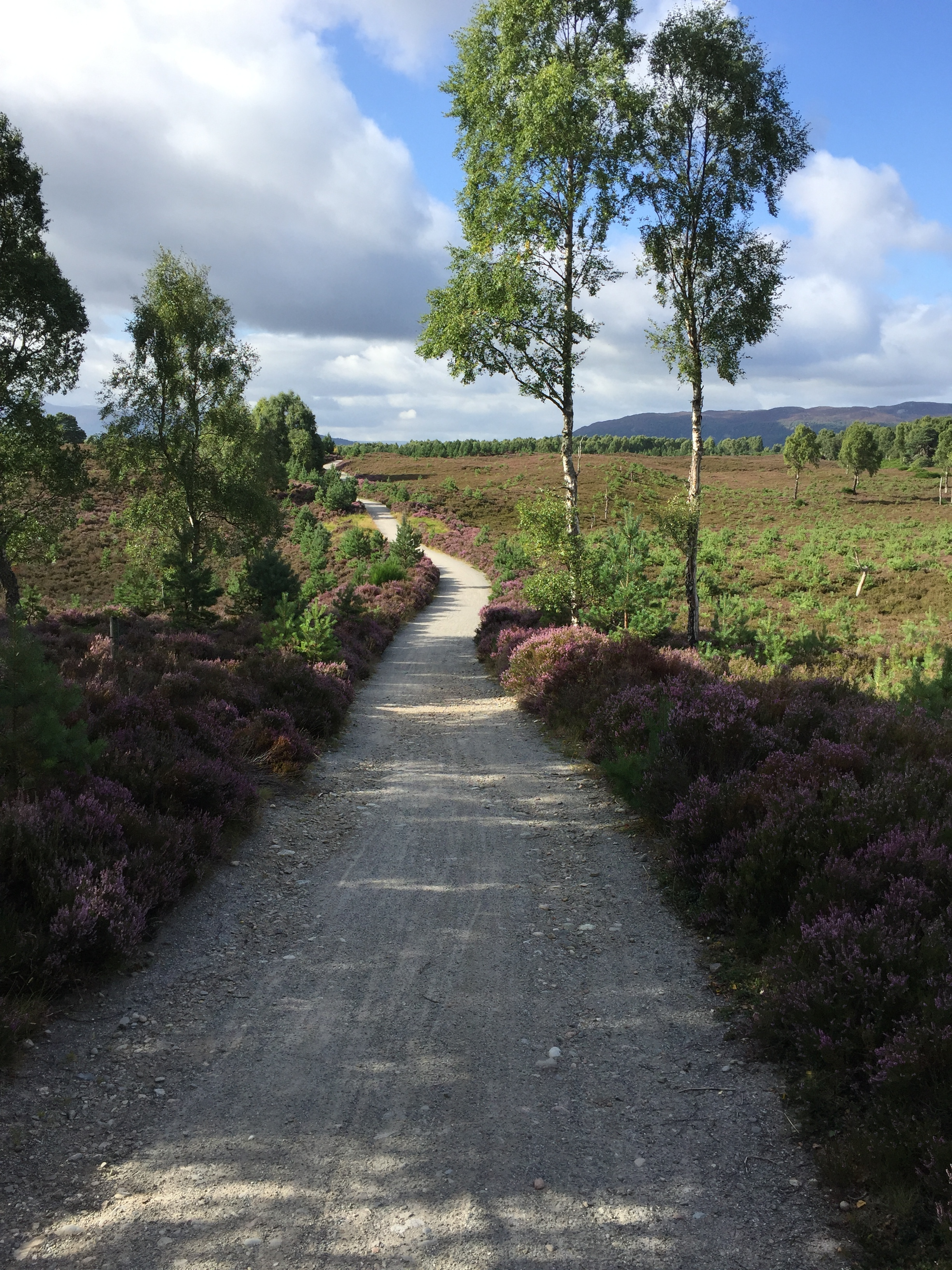 Want to Walkshop? - Find where the trail will lead you