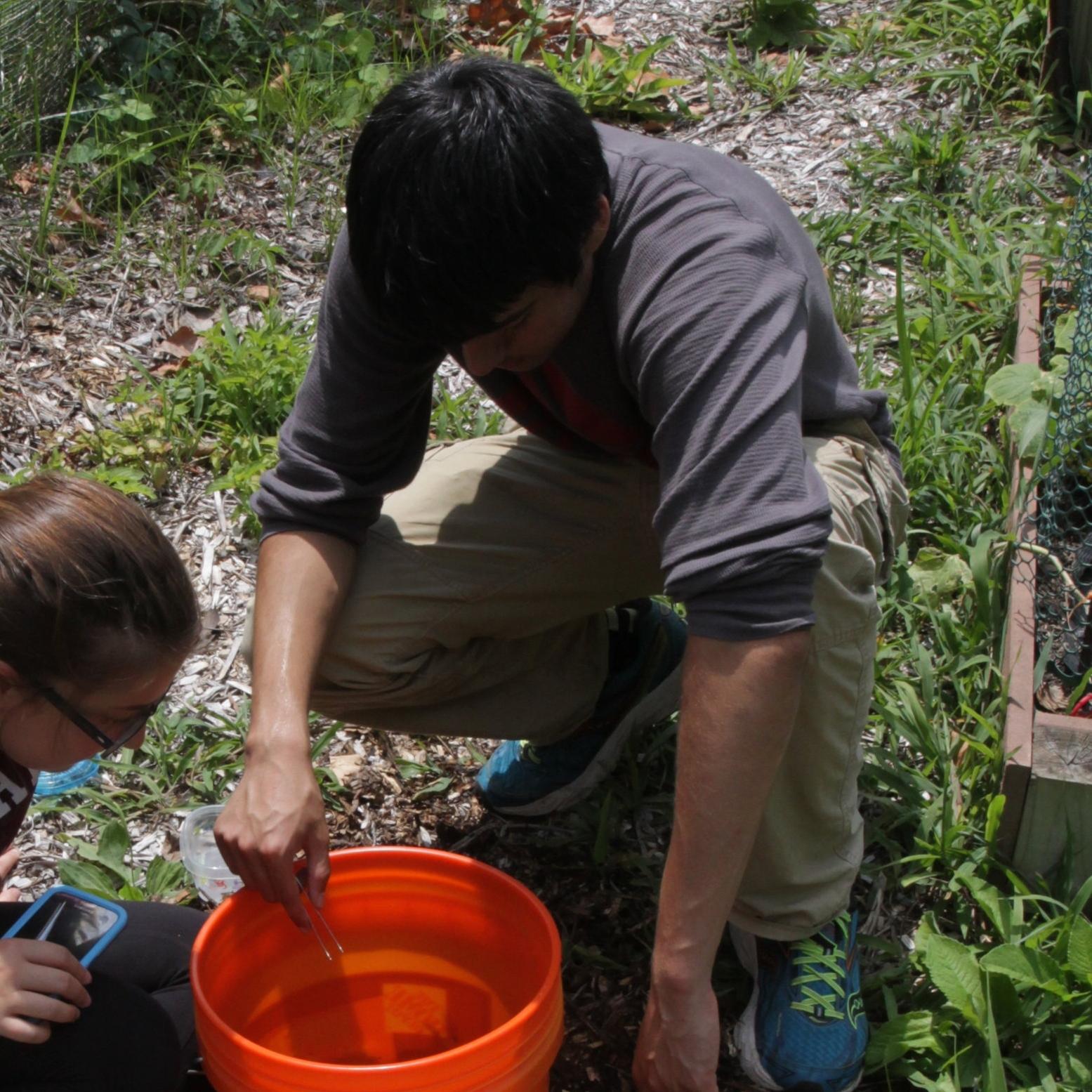 Omair Habib    TERF  '16 Lafayette High School  Project: Land-use effects on earthworm abundance