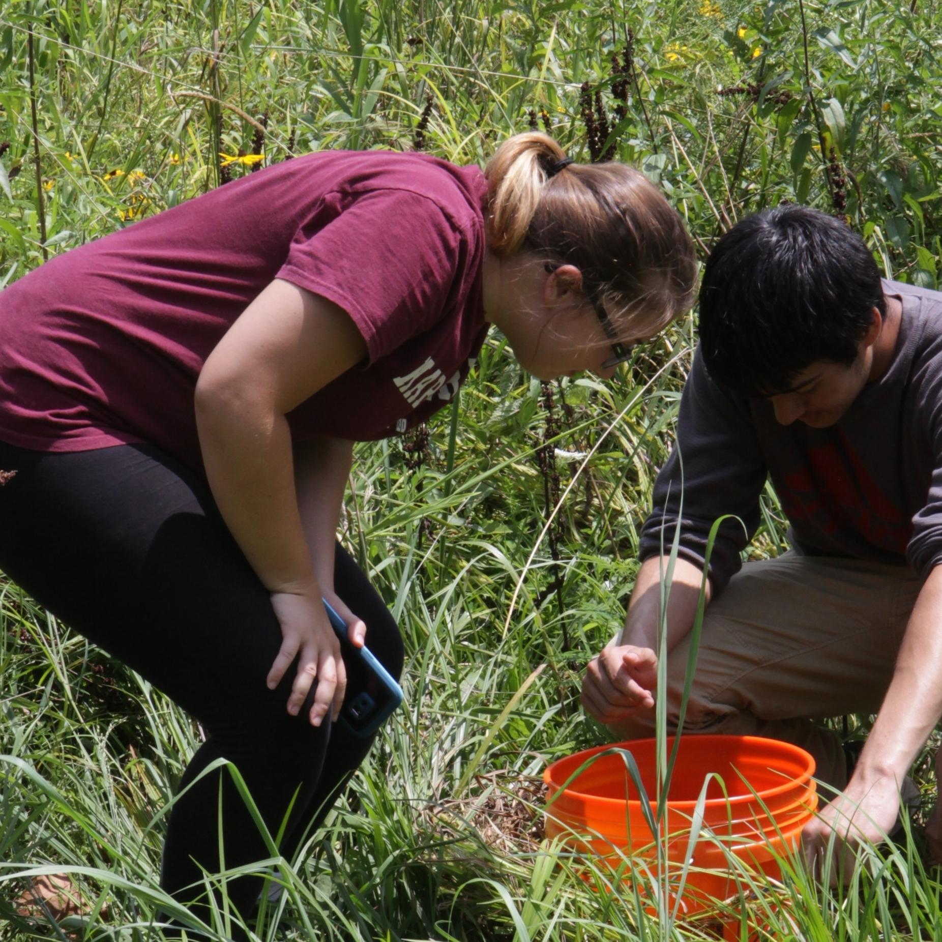 Bailey Saylor    TERF  '16 Fort Zumwalt North High School  Project: Land-use effects on earthworm abundance