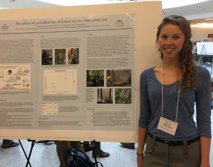 Hanna Peterman   Tyson Undergraduate Fellow '17 WashU' 19  Project: Deer use and meningeal worm prevalence in burned and unburned forest plots