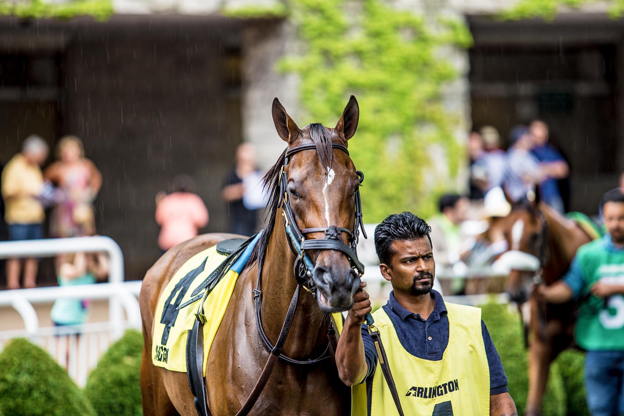 Race_Horses_467_2000x2000.jpg