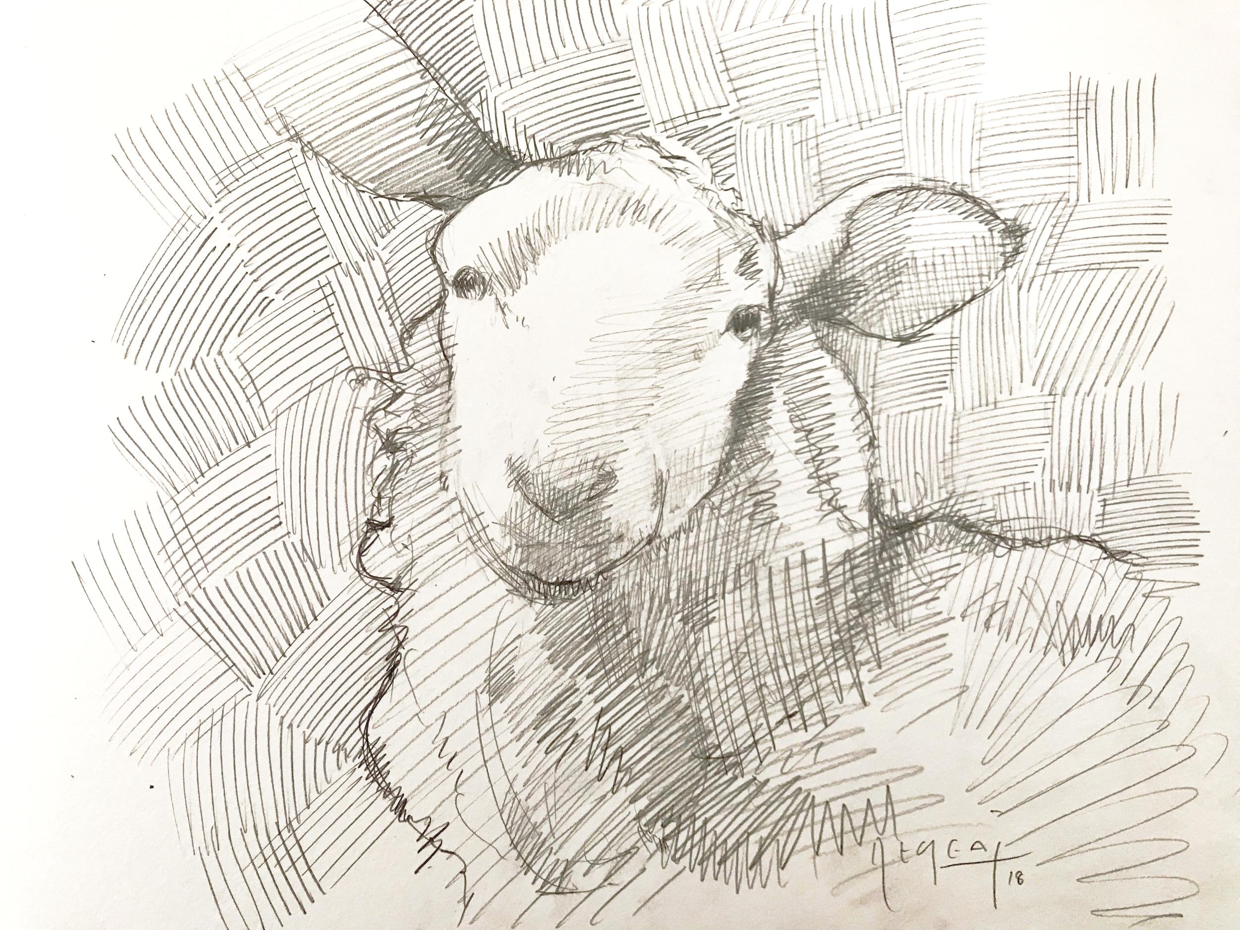 Tim Jaeger, Sheep Sketch, 2018