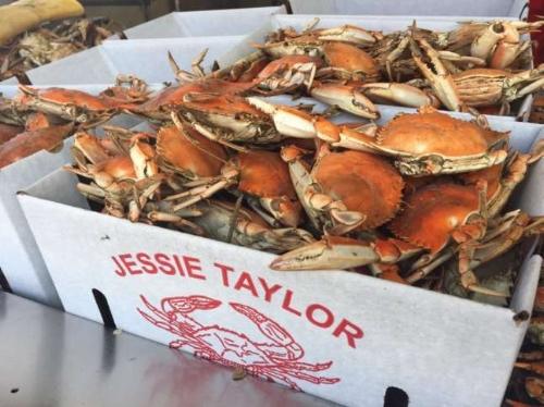 bushels of crabs.jpg