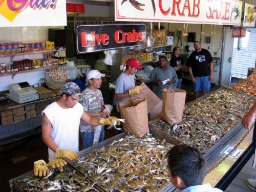 live crabs.jpg