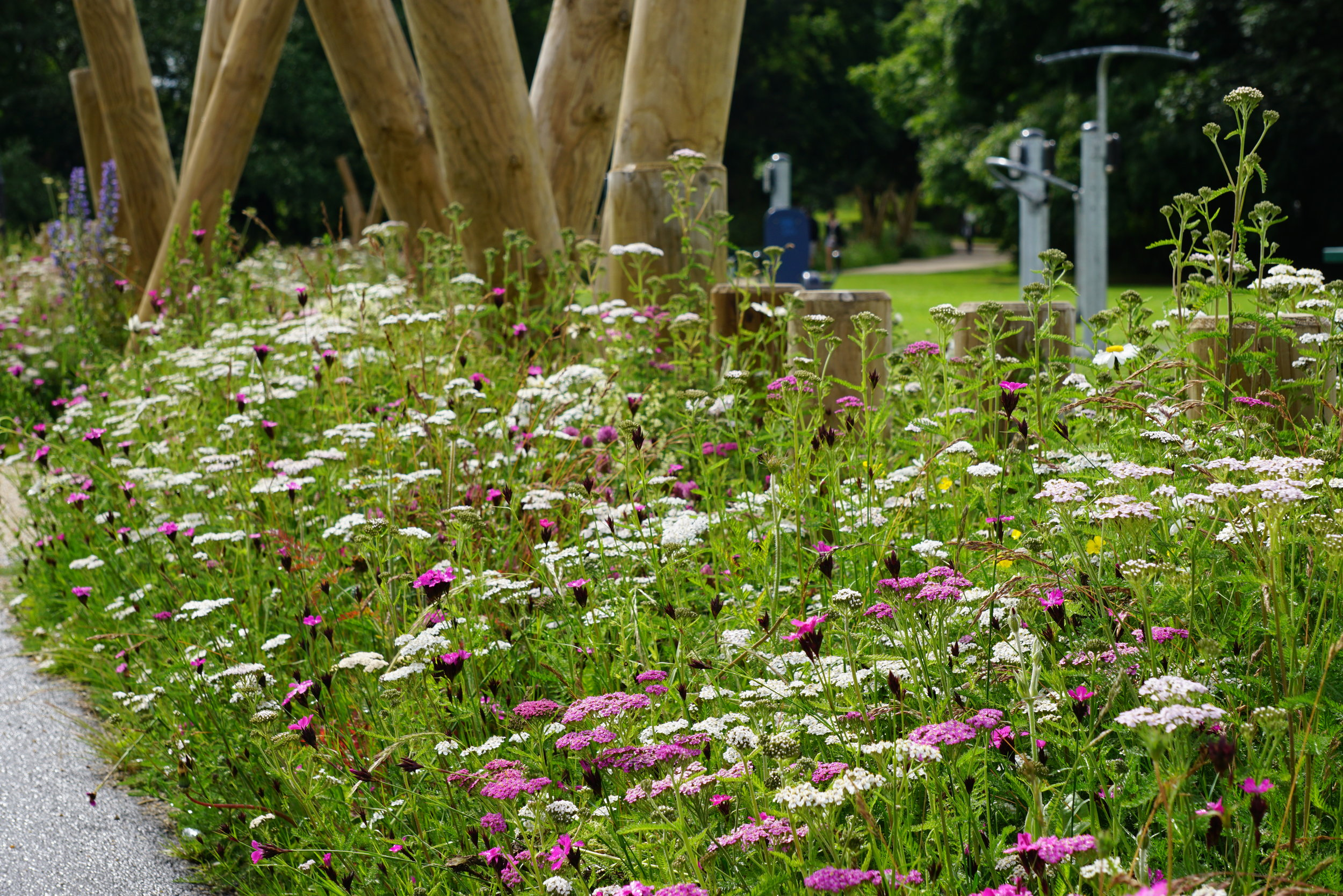 Pictorial Meadows planting in a park .JPG