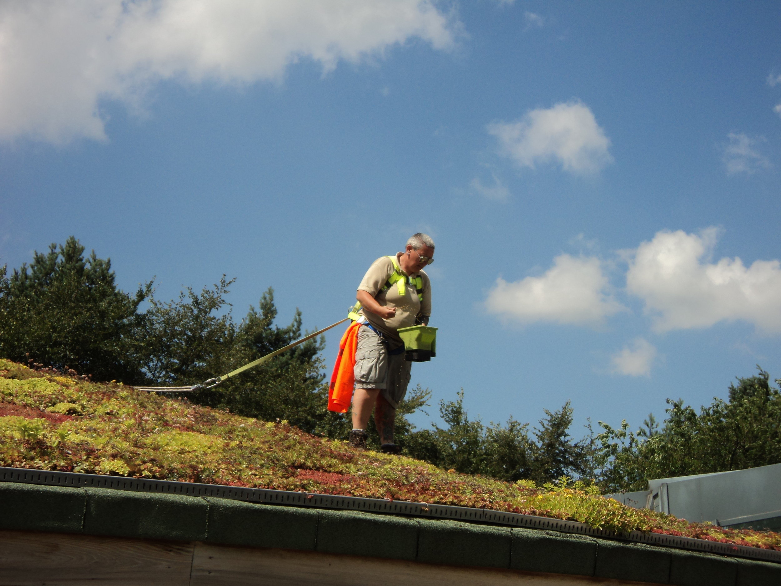 green roof maintenace peak district