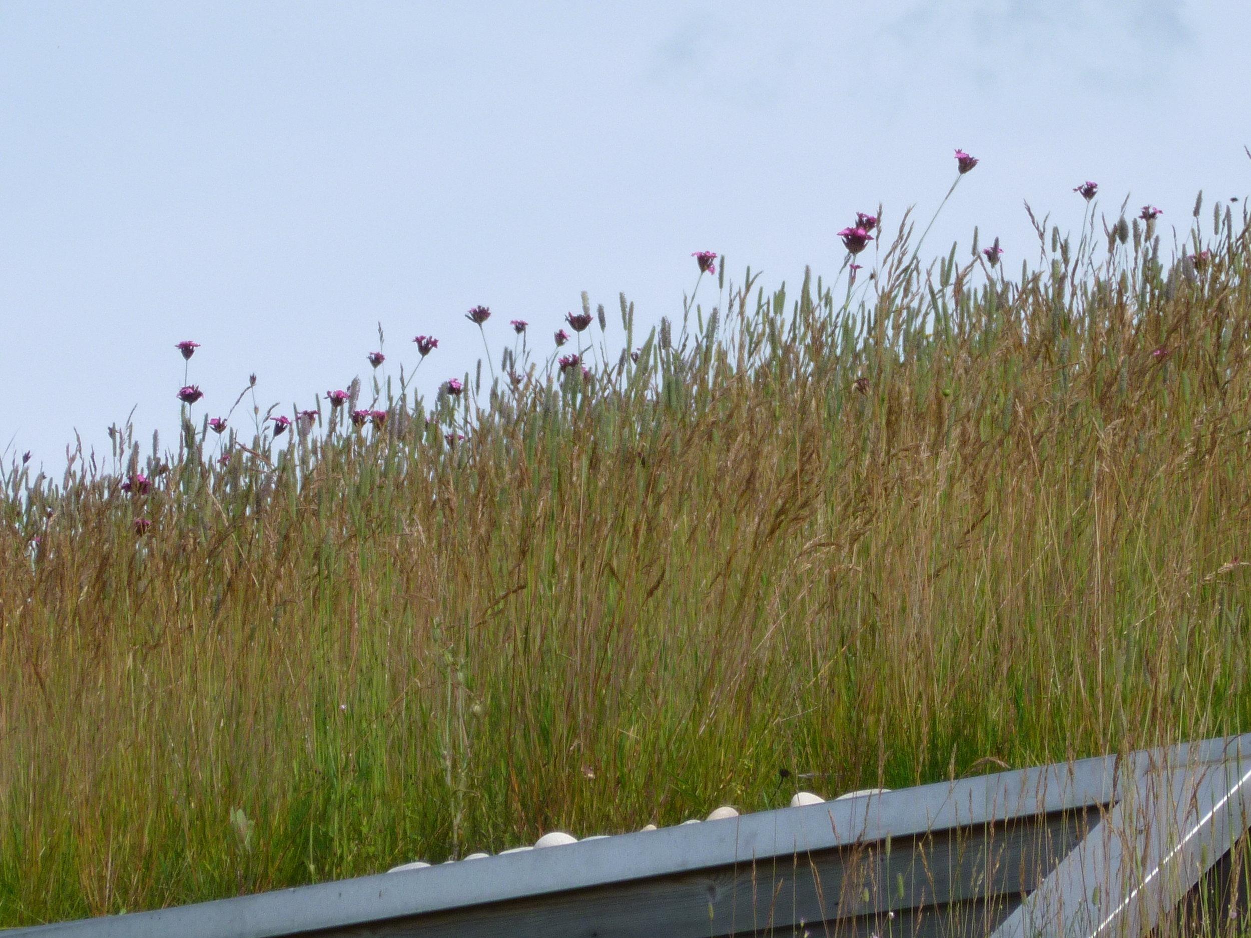 meadow green roof.JPG