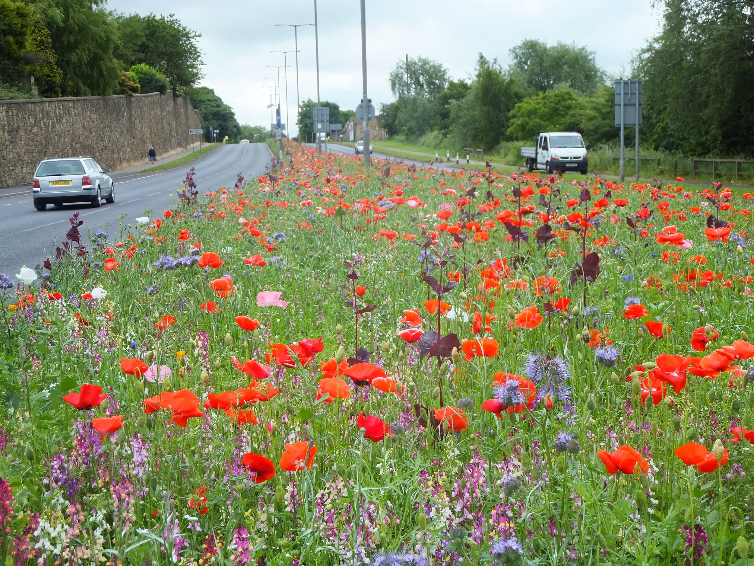 Rotherham+highway+wildflower+meadows.jpg