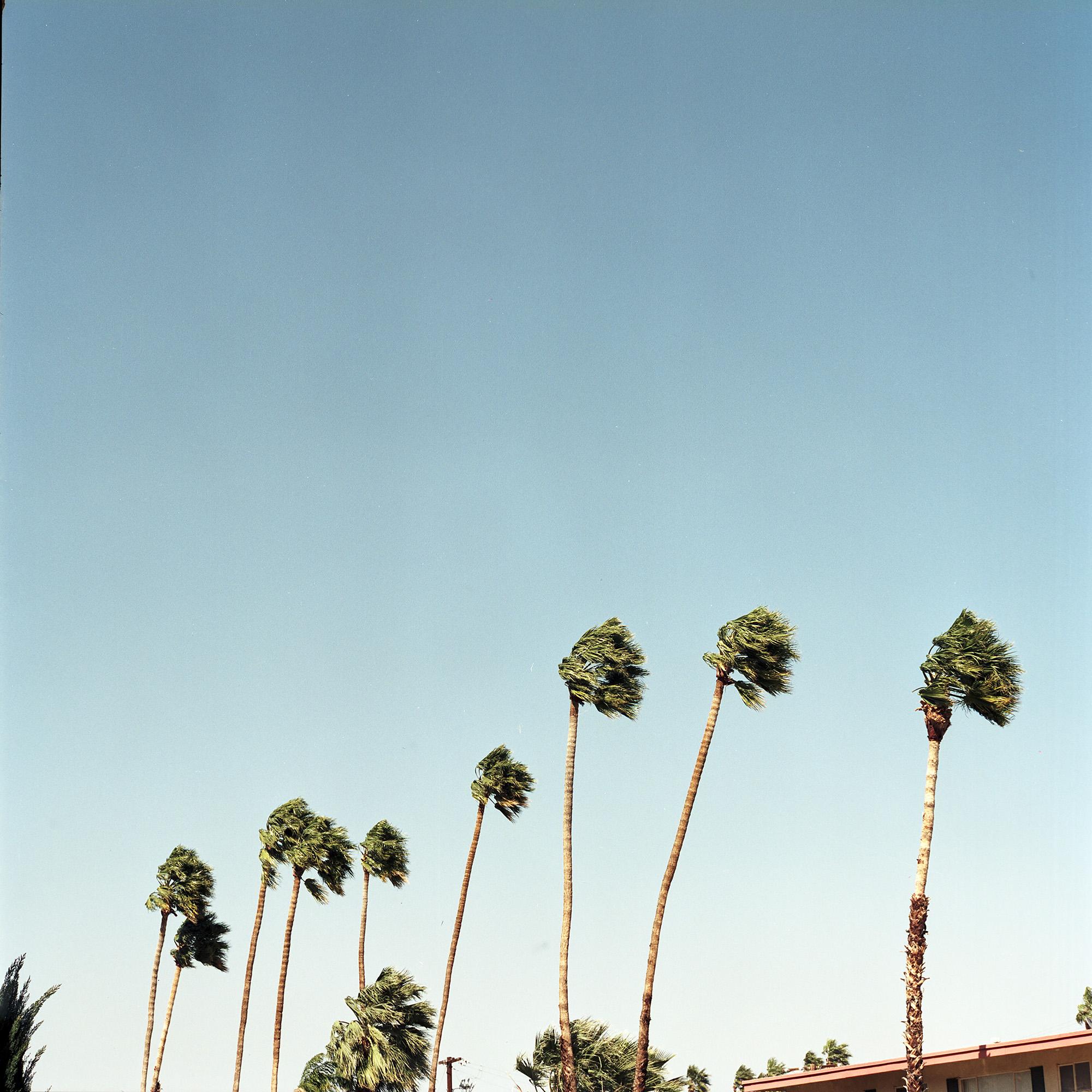 Palm Trees_02.jpg