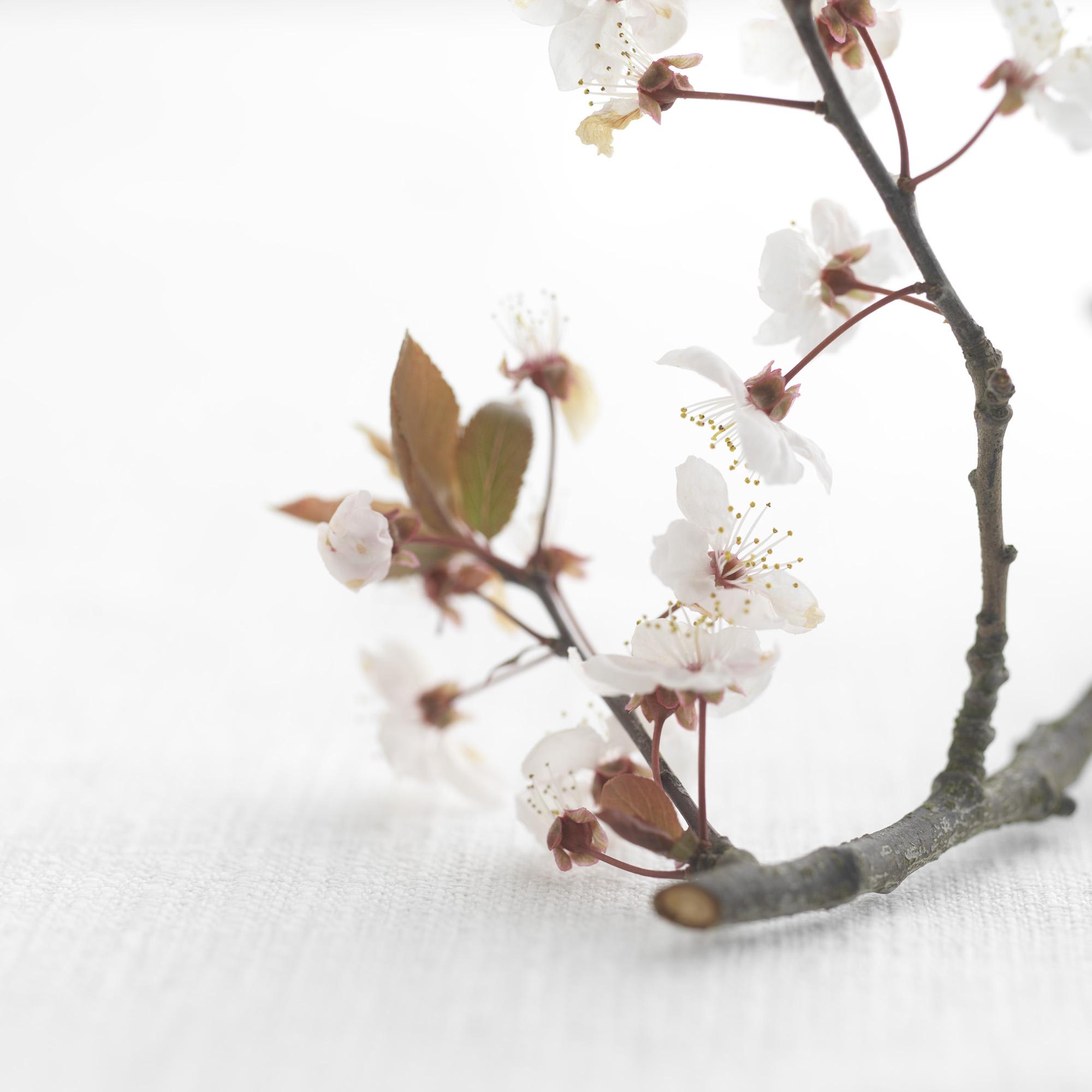 Flowers 005.jpg