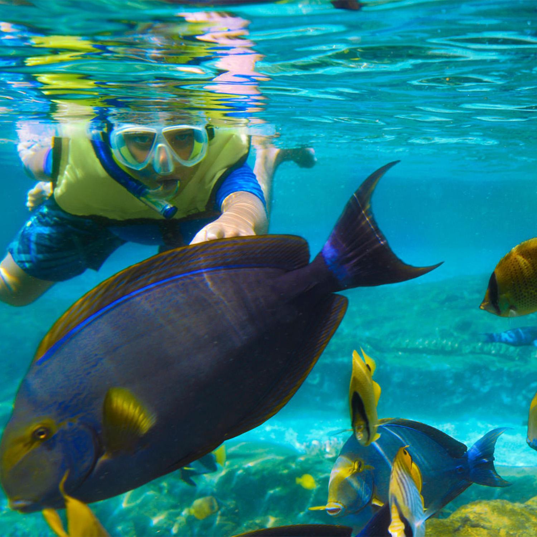 snorkeling_square.jpg
