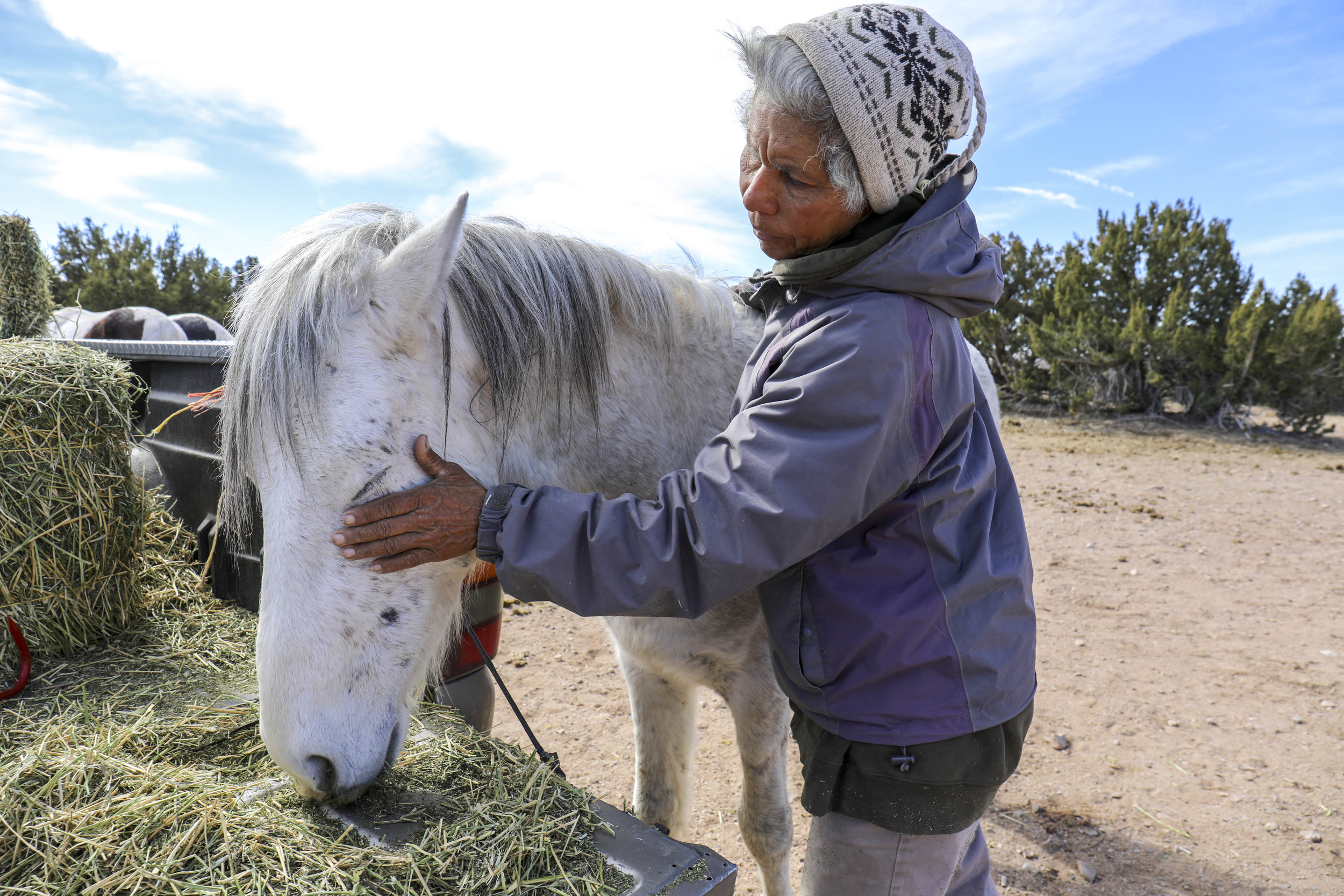 Adelina Sosa, a longtime volunteer for the nonprofit organization Placitas Wild, pets one of the free-roaming horses she cared for on a daily basis outside of Placitas, New Mexico, in February. A month later, Placitas Wild had to find new homes for all the horses that were living on a preserve in San Felipe Pueblo.   Photos by Diana Cervantes
