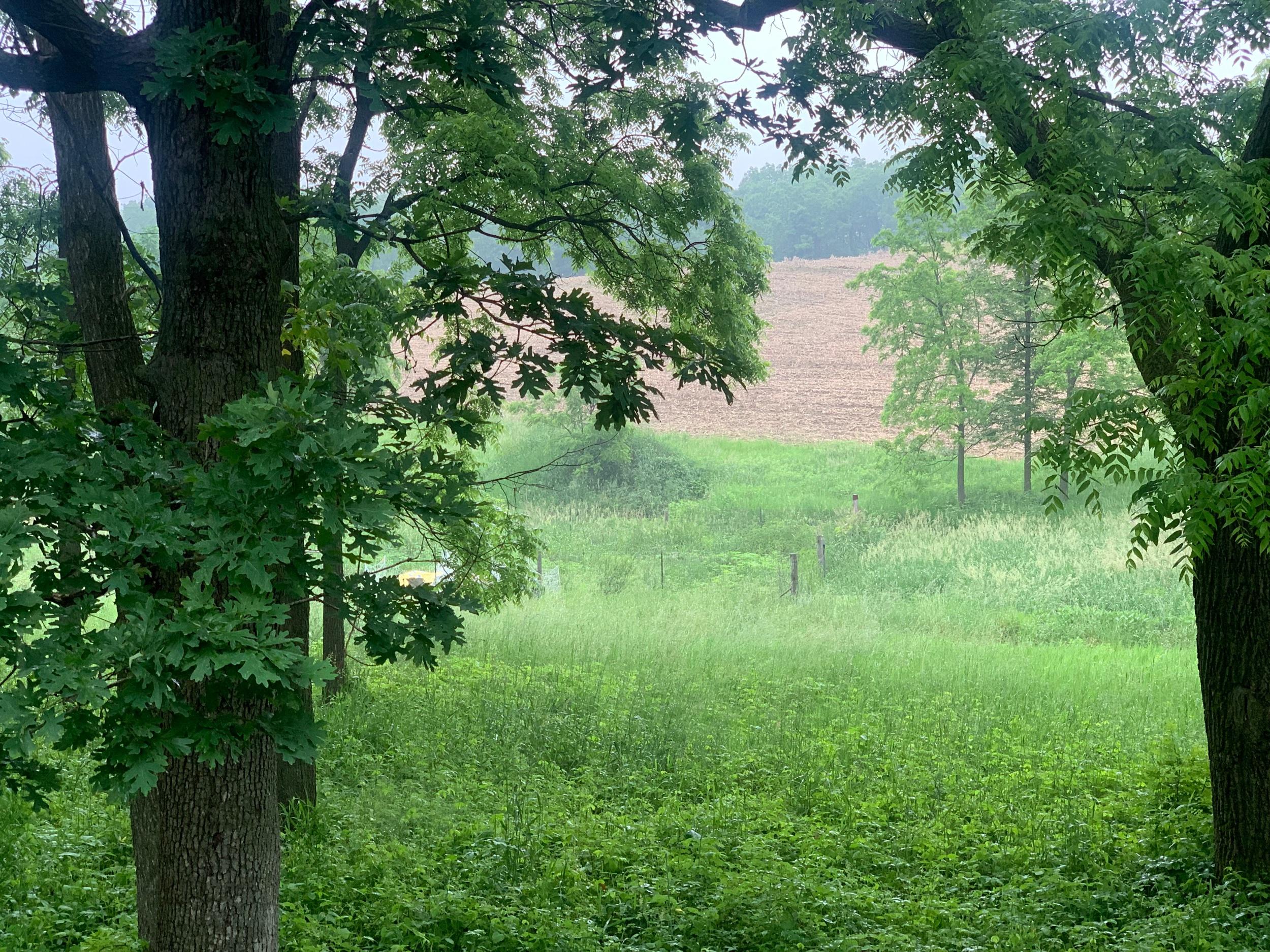 Near summer rain in Northeastern Iowa