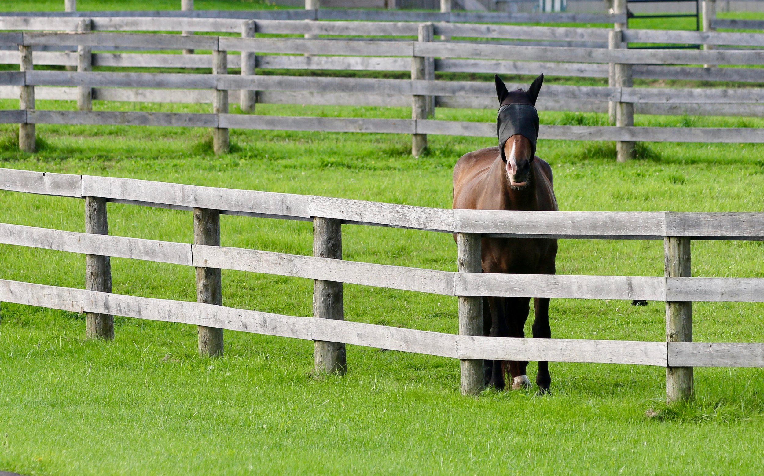 Paddocks - Fresh water 24/7 year-round & green grass paddocks for daily individual and group turnout. Paddocks are seeded with pasture mix to allow for a consistent supply of green grass throughout the season. Management employs a paddock rotation system to ensure optimal grazing opportunities for all areas. The property has brand new three-board fencing and safe gateways.