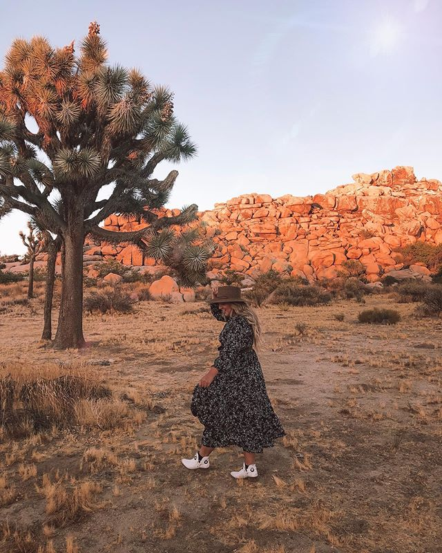 Out here looking for Joshua Trees.
