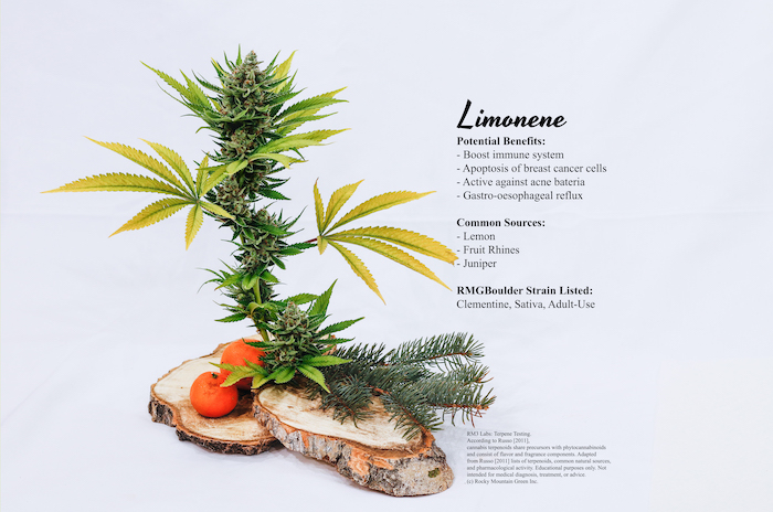 Clementine at fresh harvest and terpene profile