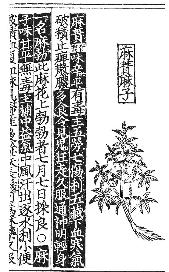 Hemp plant from the [1234 AD Edition] Cheng-Lei Pen-ts'ao    Book      Illustration & Translation    Source     TRANSLATION:  Column 5 (right most column)   [1,2] Medical Cannabis [4,5] is spicy when eaten [7-8] but has poison [9-13] good for the five organs, to bring the bodies Yin Yang into balance.    Column 4   [1,2 ] Medical Cannabis [3,4] stop eating [4,5] let go [eat more] [9-12] you will see white ghosts [13] walking around [14-20] and eat long enough, you will know how to talk to the Gods.