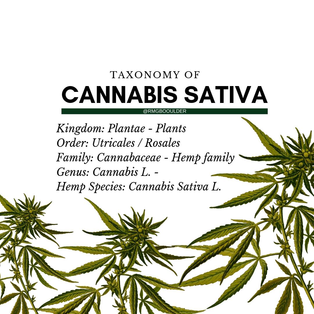 Taxonomy for cannabis.jpg