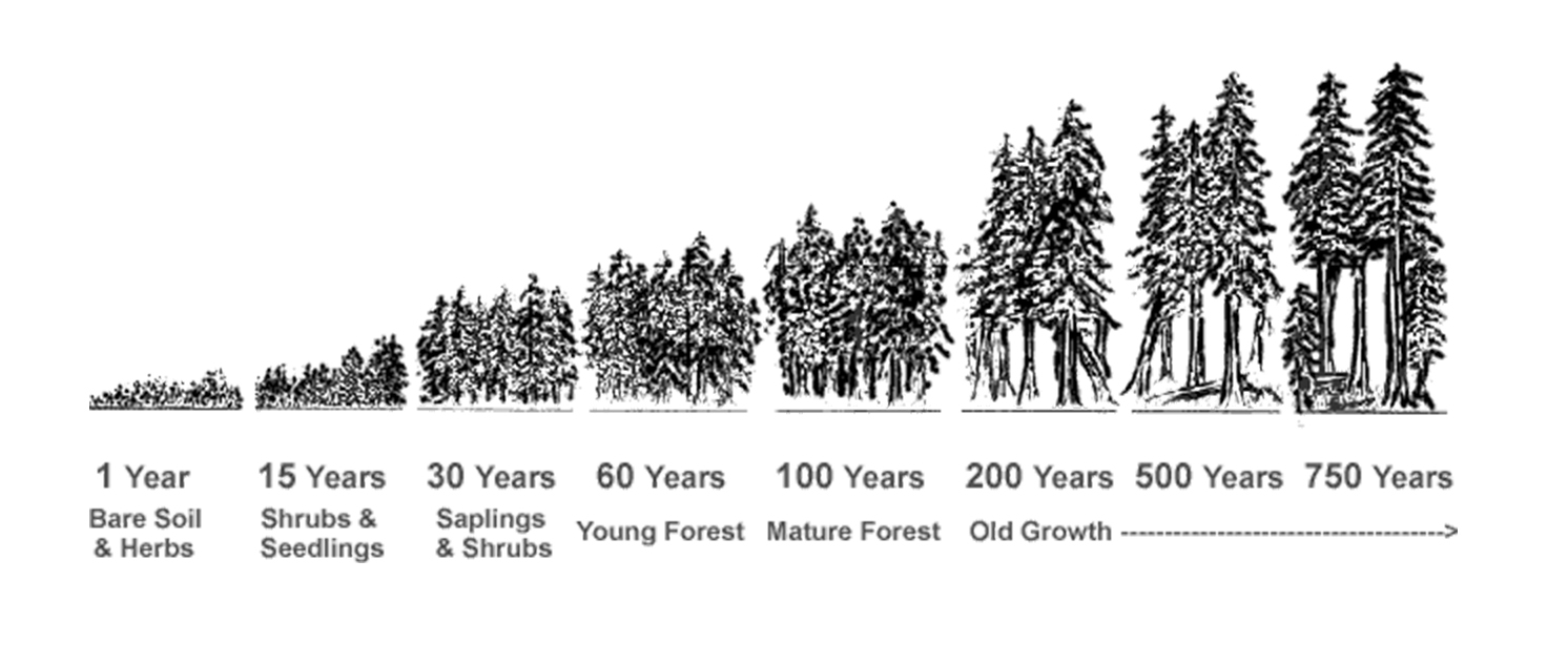 treegrowth.jpg