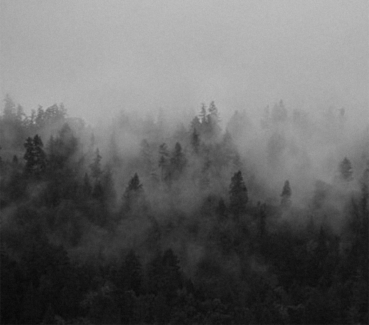 forest_filmgrain.jpg