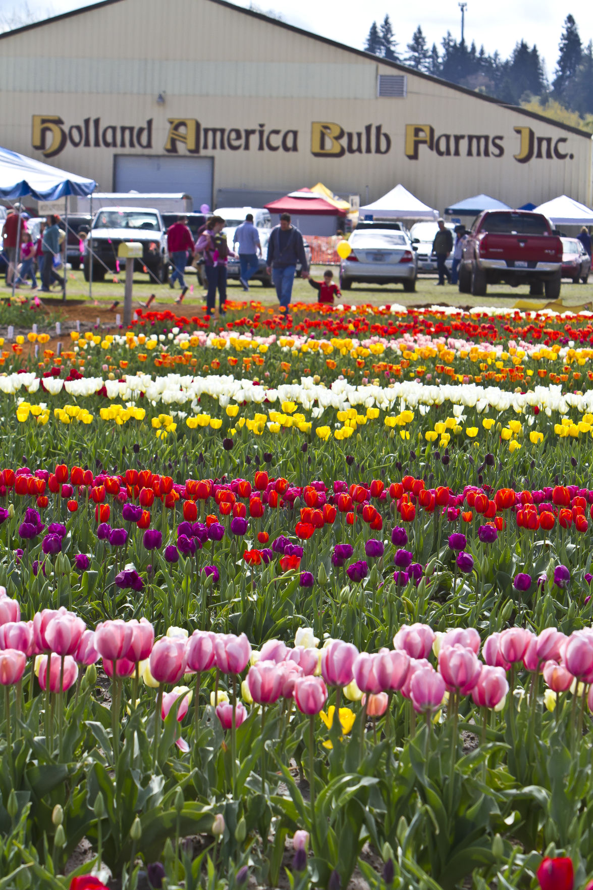 Cancelled this year, the Woodland Tulip Festival is well-worth catching. Smaller and more quaint, this is a fun, smaller-town festival that the family will enjoy. Image Courtesy: The Reflector