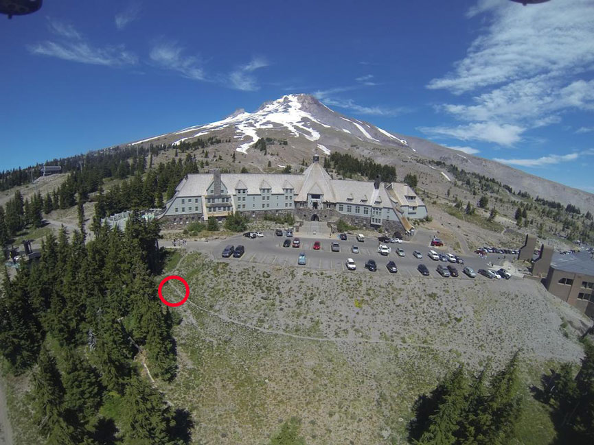 Here is a picture showing where the bear was spotted, and where it enters the trees in the above video. Original Image Courtesy: Timberlinelodge.com