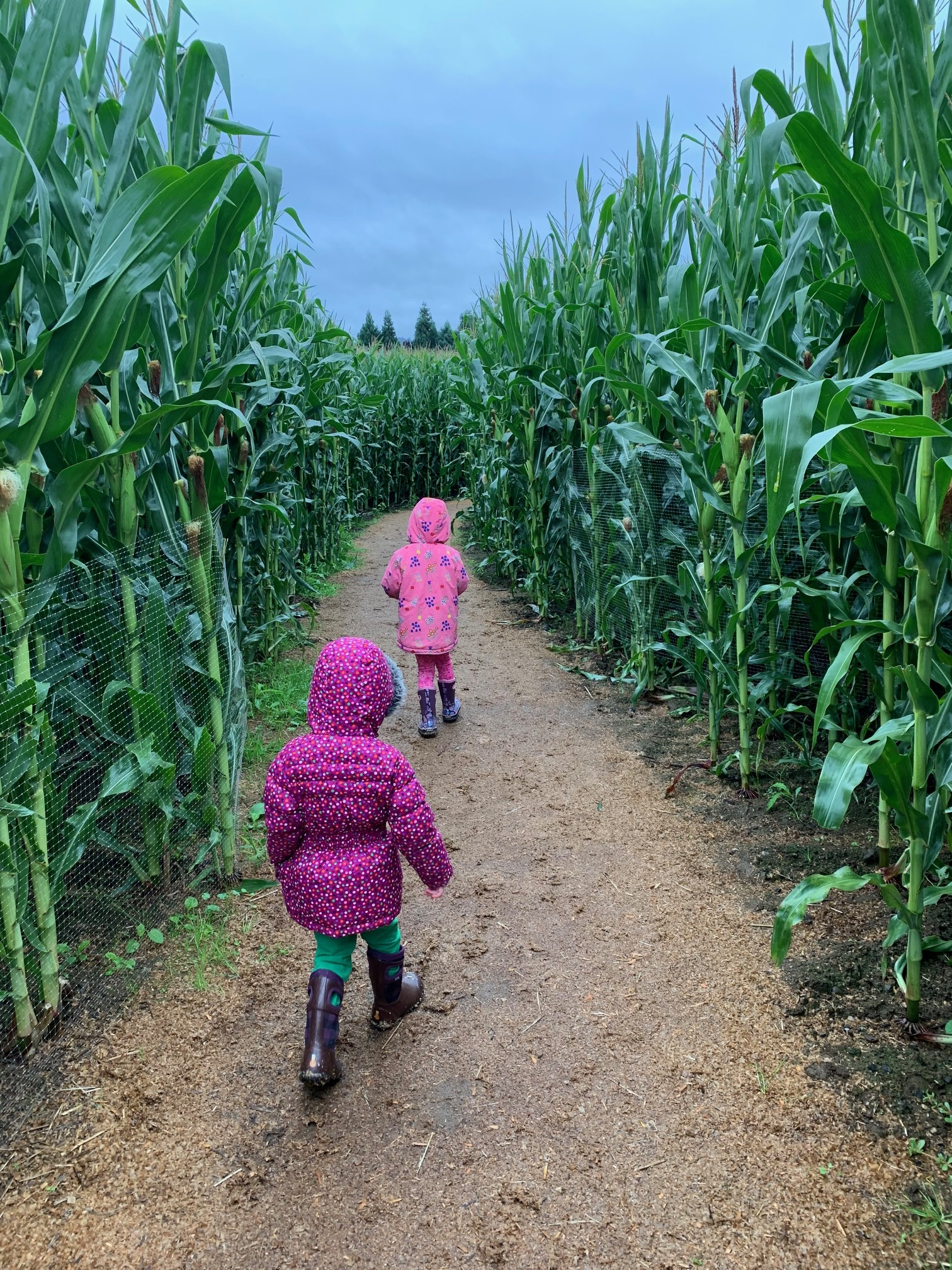 My two little ones headed down the corn maze trail…brave!! Image Courtesy: Dan Meyers